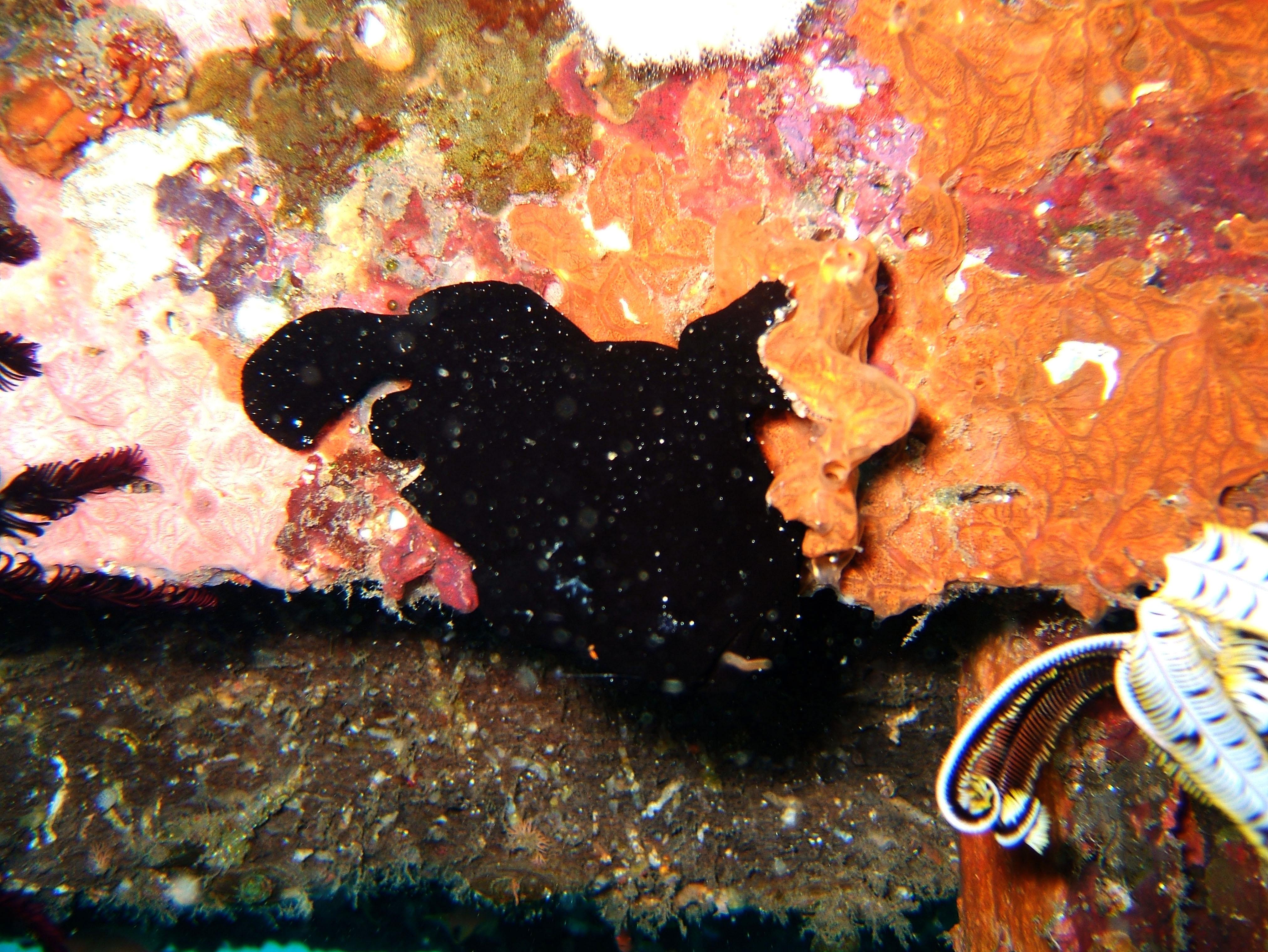 Dive 8 Philippines Mindoro Sabang Junk July 2005 14