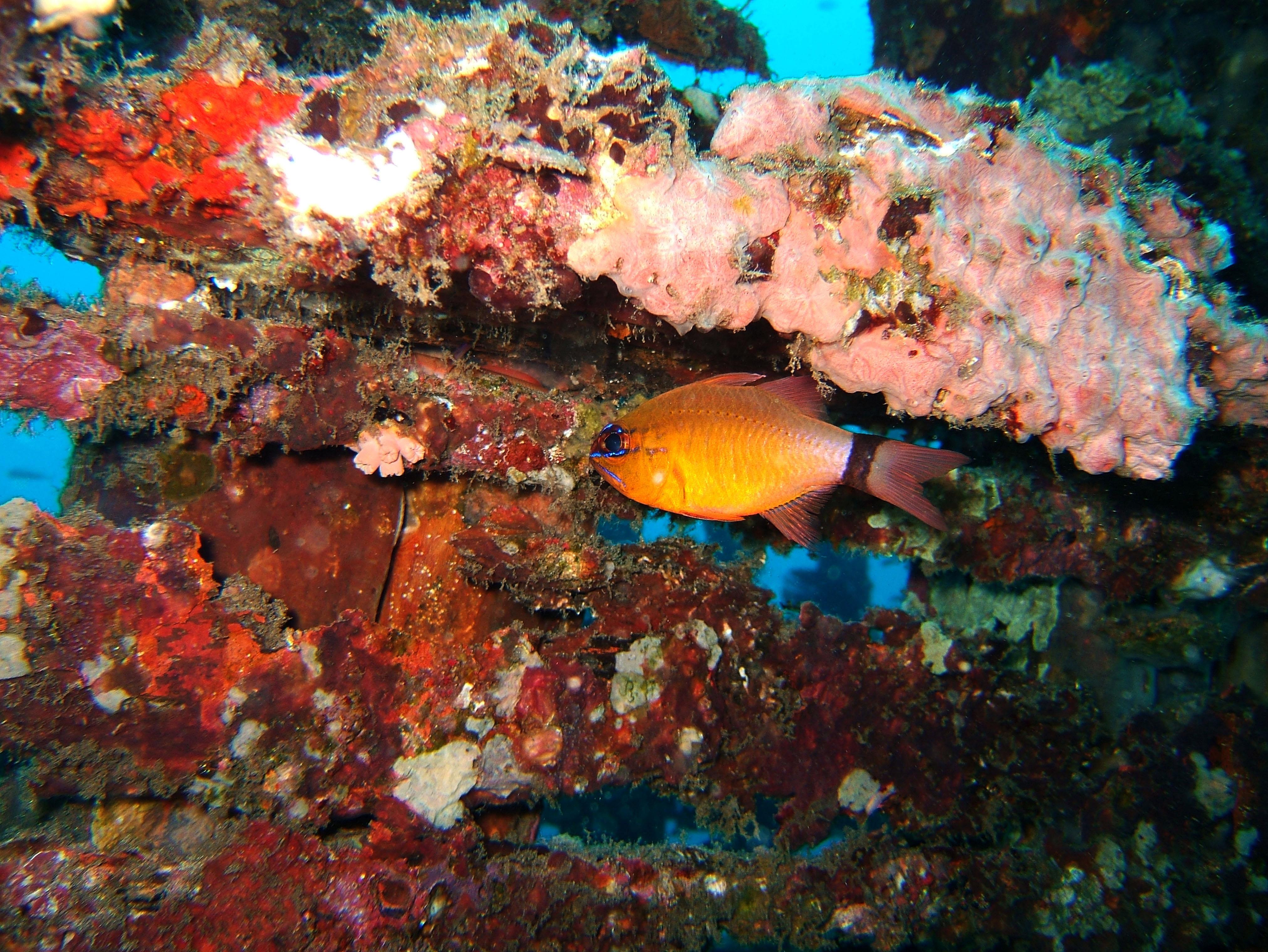 Dive 8 Philippines Mindoro Sabang Junk July 2005 16