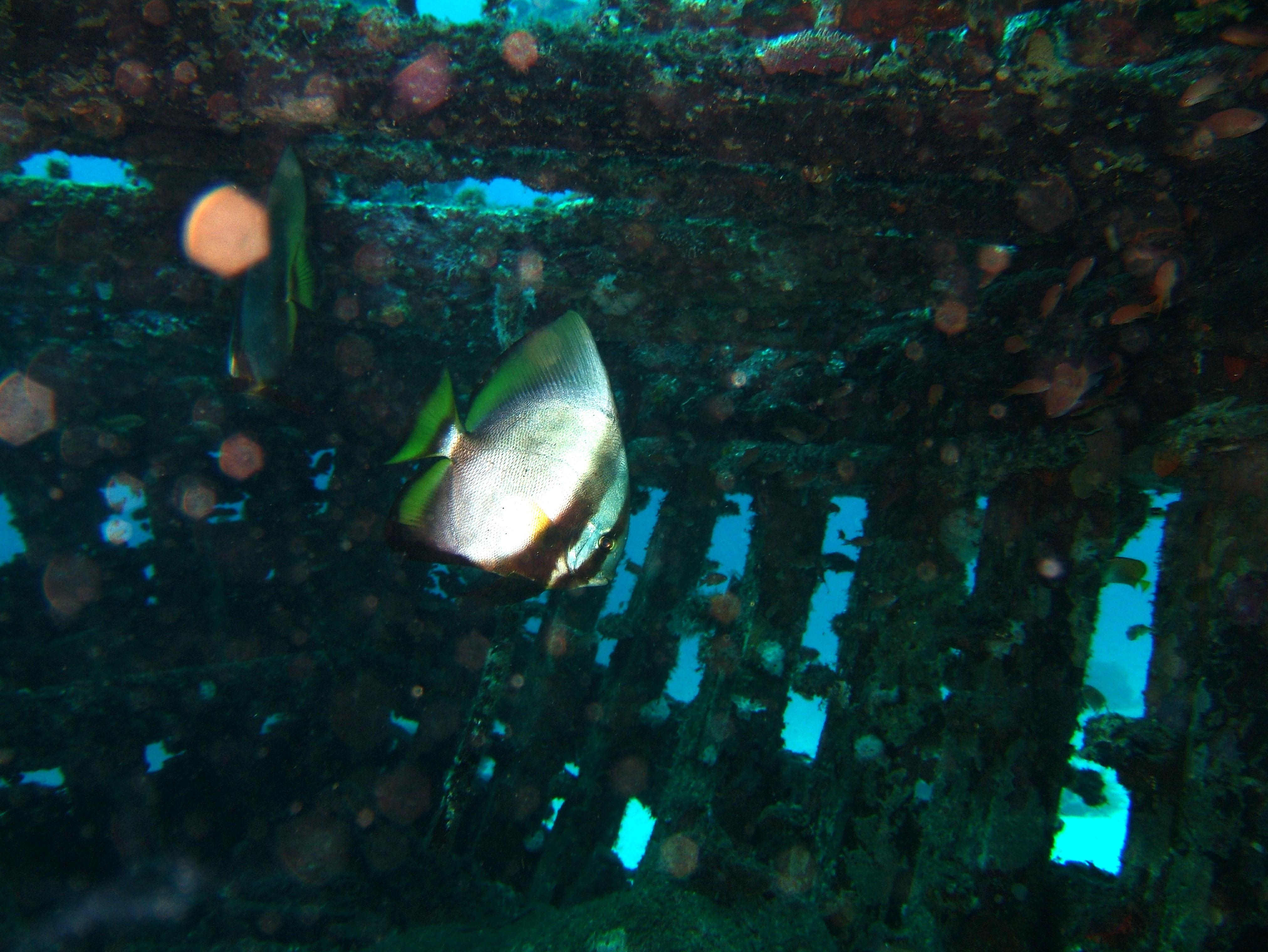 Dive 8 Philippines Mindoro Sabang Junk July 2005 19