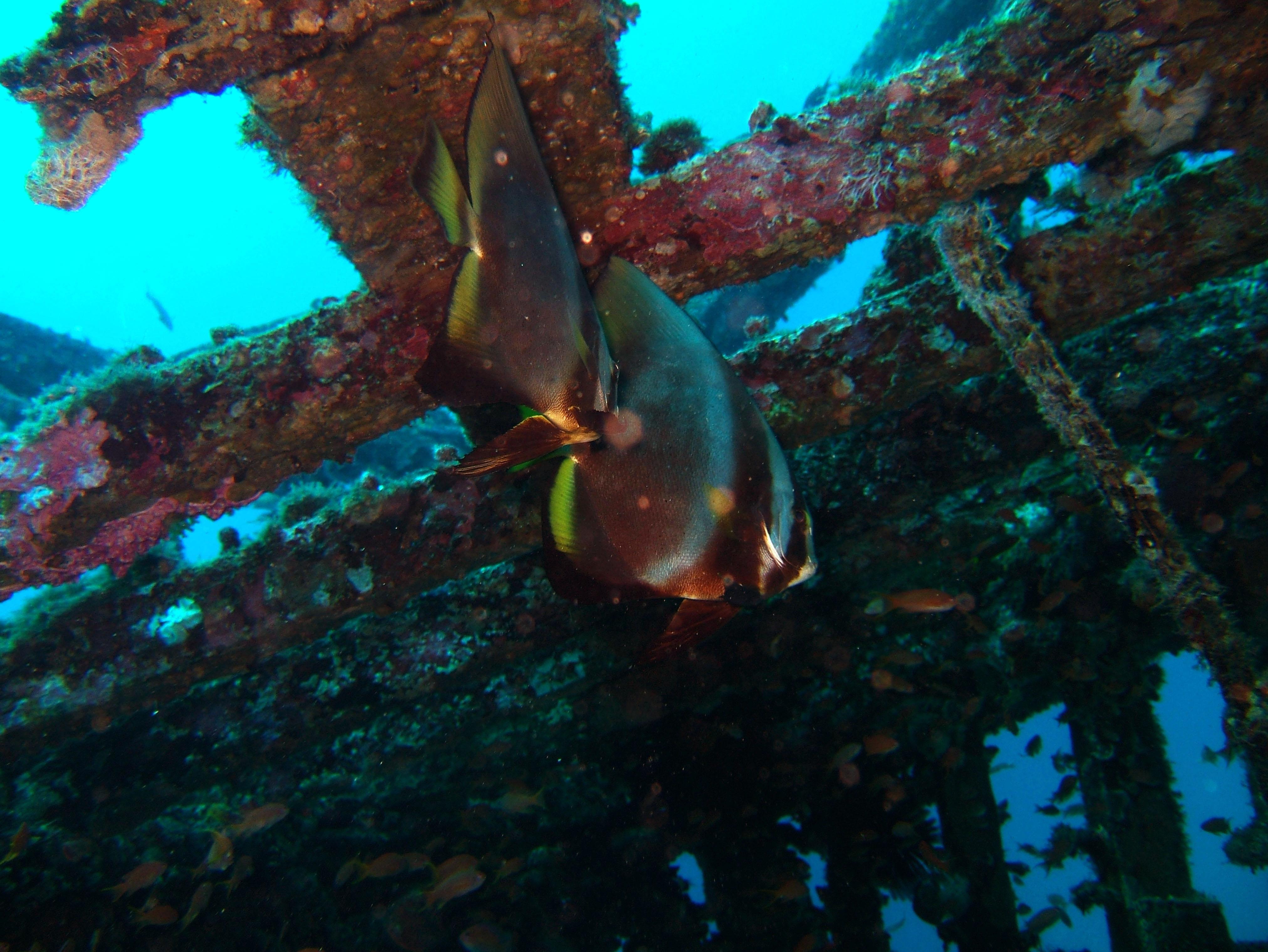 Dive 8 Philippines Mindoro Sabang Junk July 2005 20