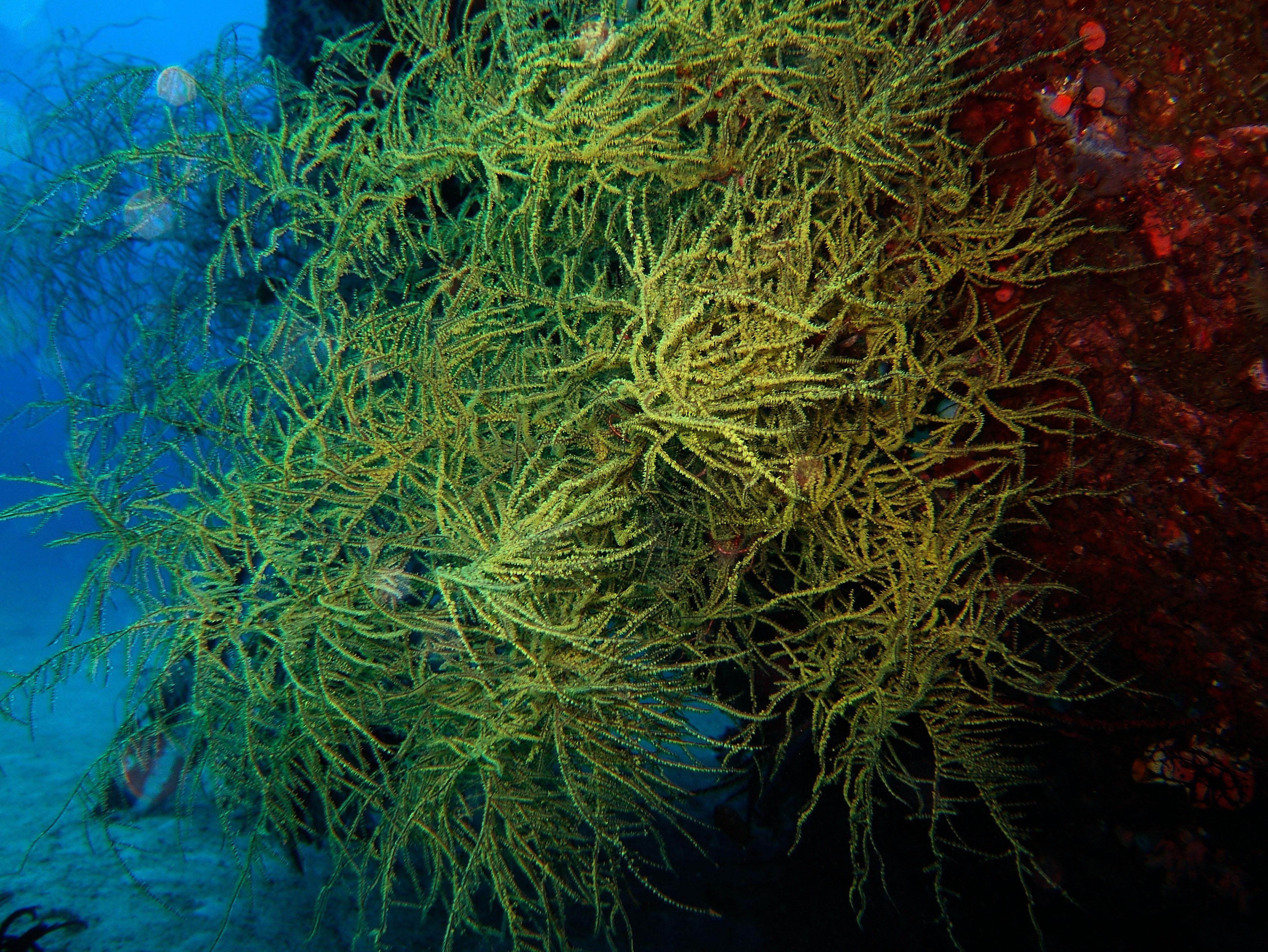 Dive 8 Philippines Mindoro Sabang Junk July 2005 31