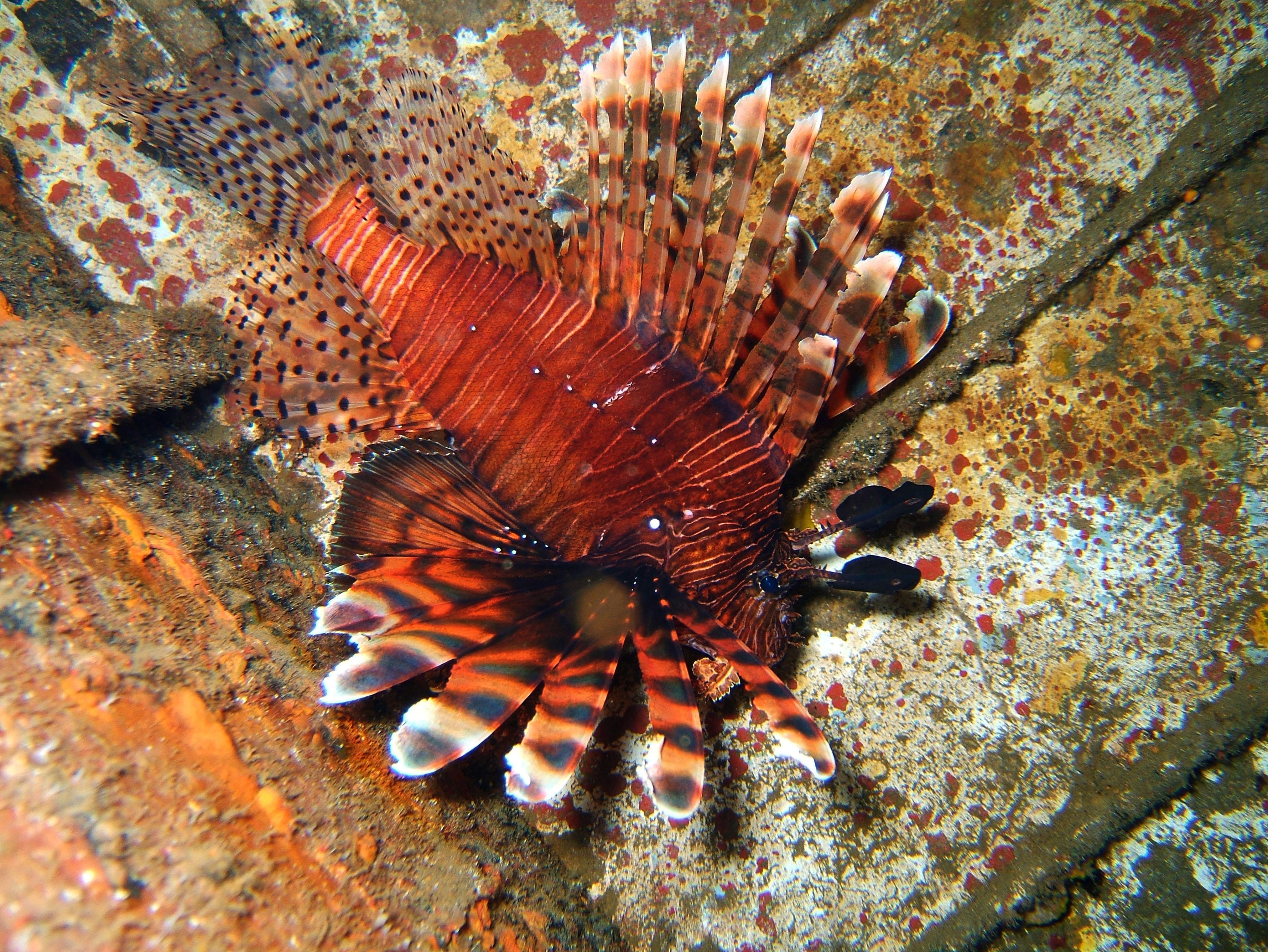 Dive 8 Philippines Mindoro Sabang Junk July 2005 32