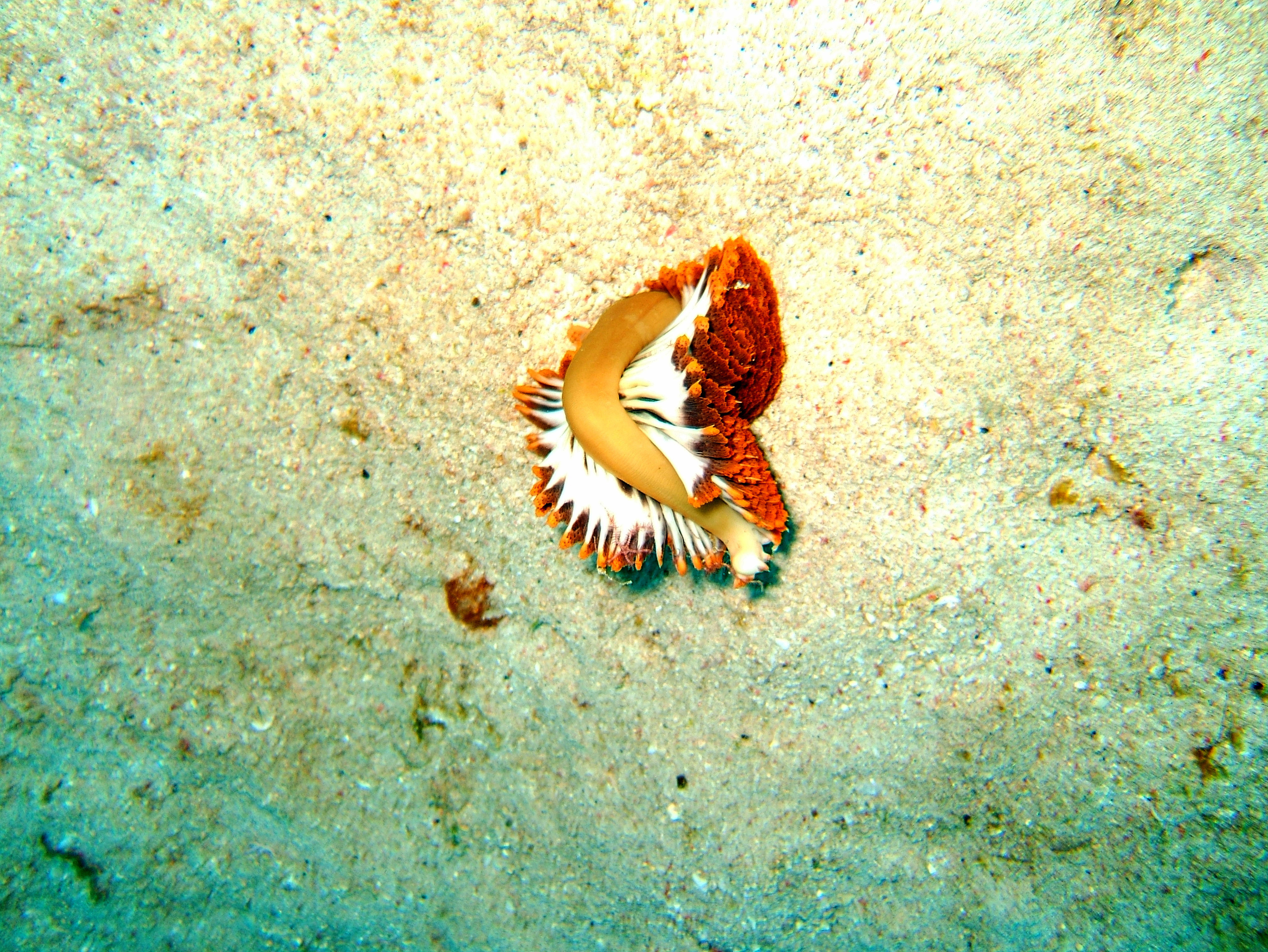 Dive 8 Philippines Mindoro Sabang Junk July 2005 37