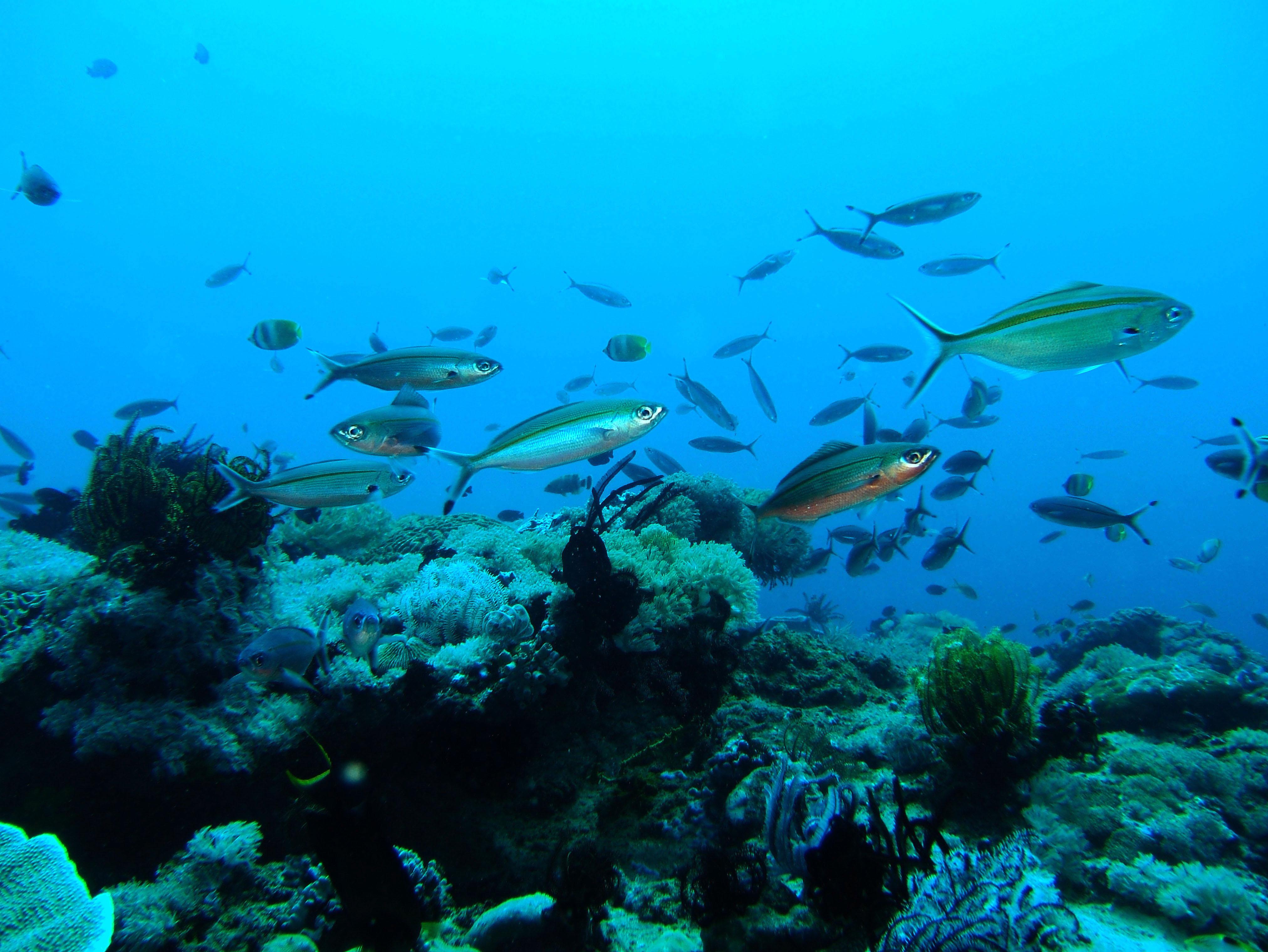 Dive 8 Philippines Mindoro Sabang Junk July 2005 44