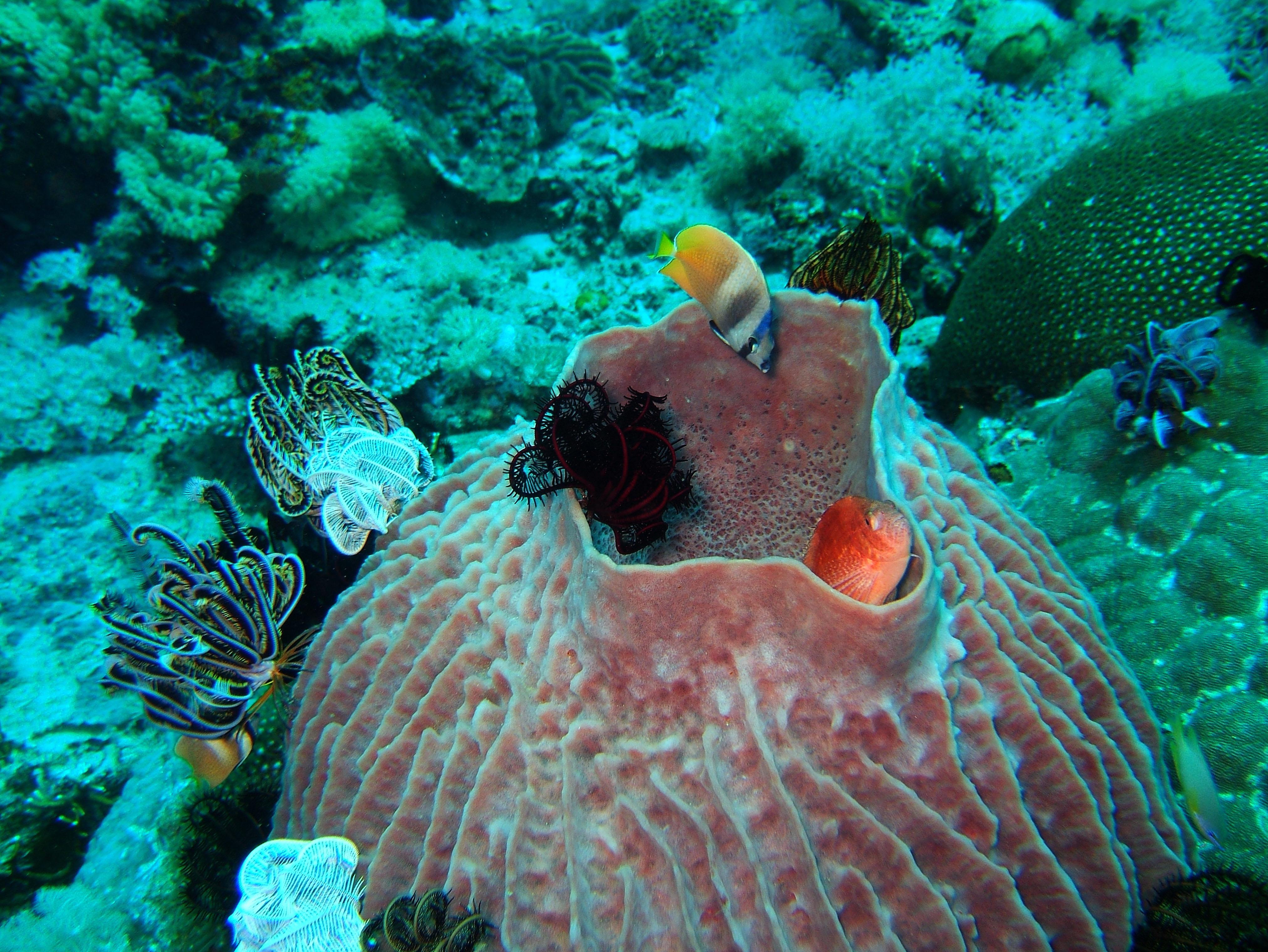 Dive 8 Philippines Mindoro Sabang Junk July 2005 45