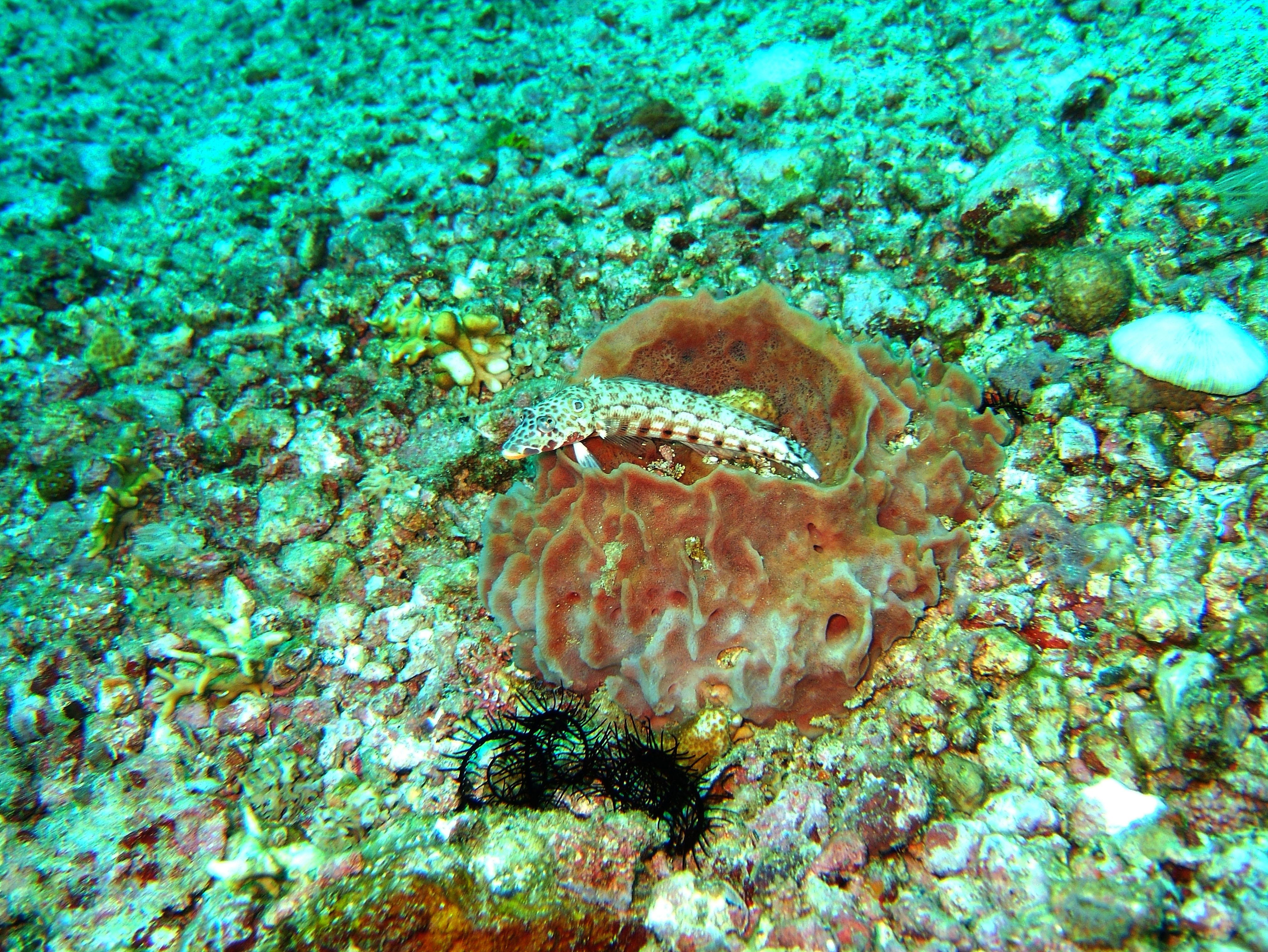 Dive 8 Philippines Mindoro Sabang Junk July 2005 47