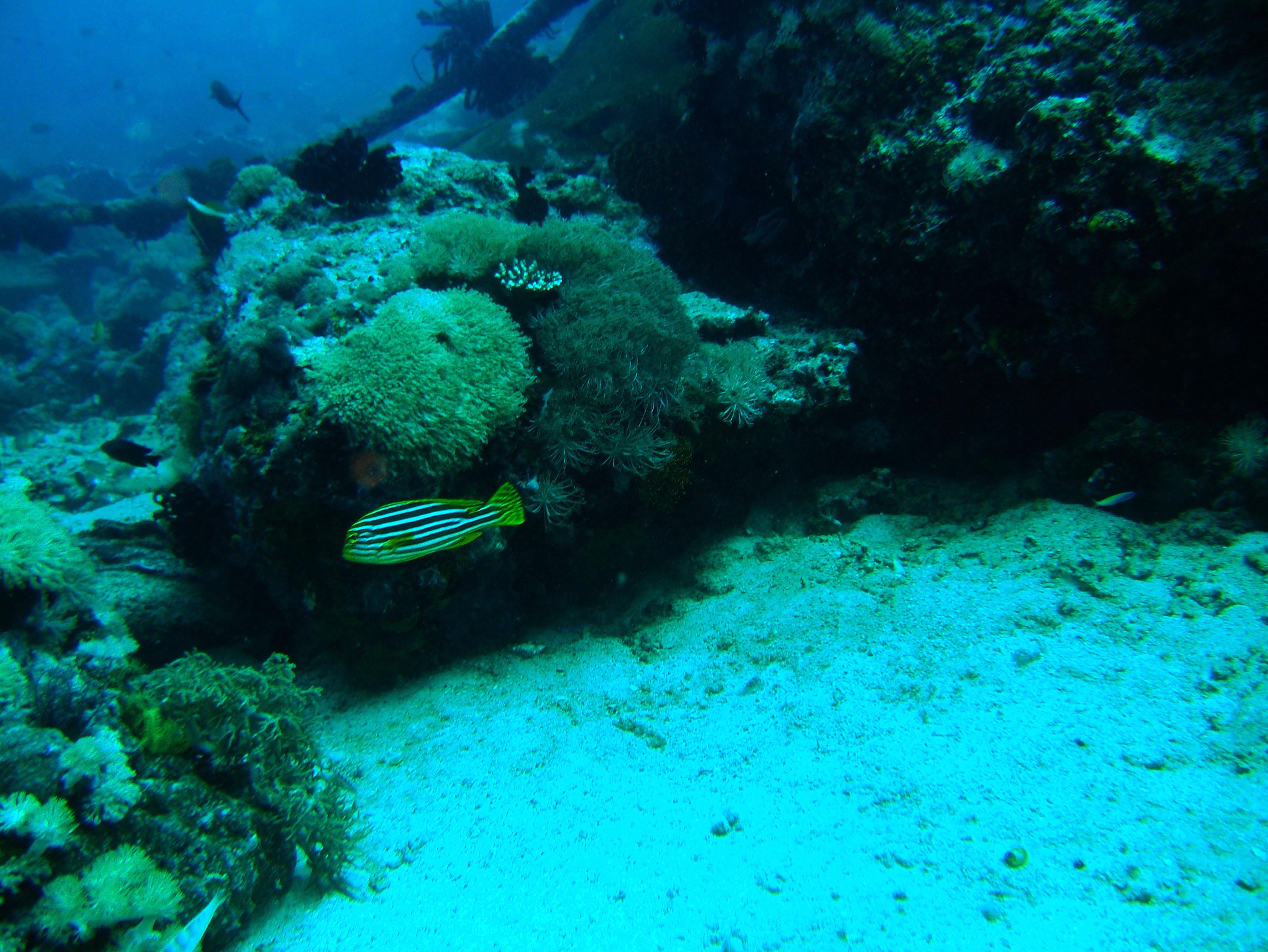 Dive 8 Philippines Mindoro Sabang Junk July 2005 52