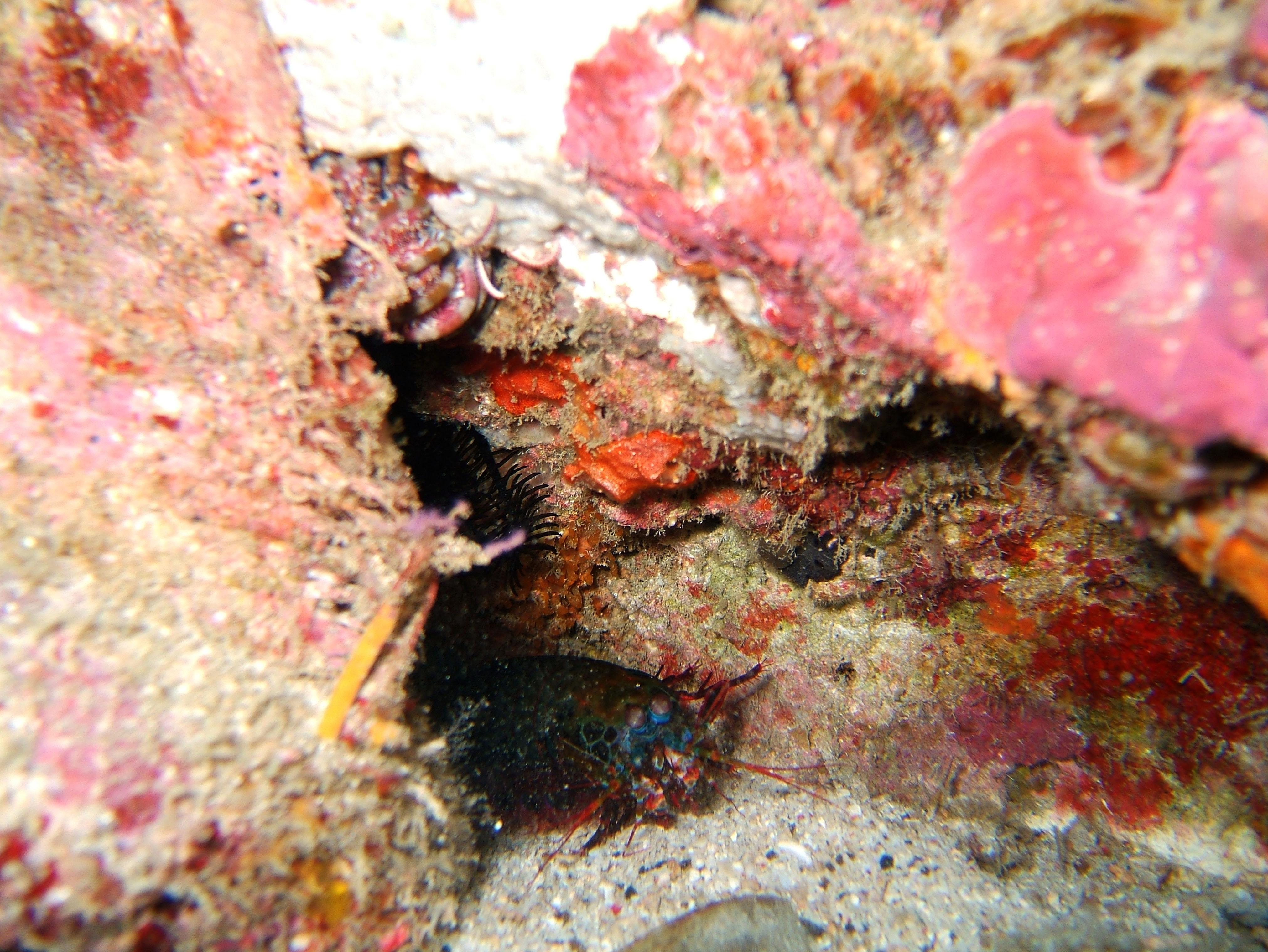 Dive 8 Philippines Mindoro Sabang Junk July 2005 53