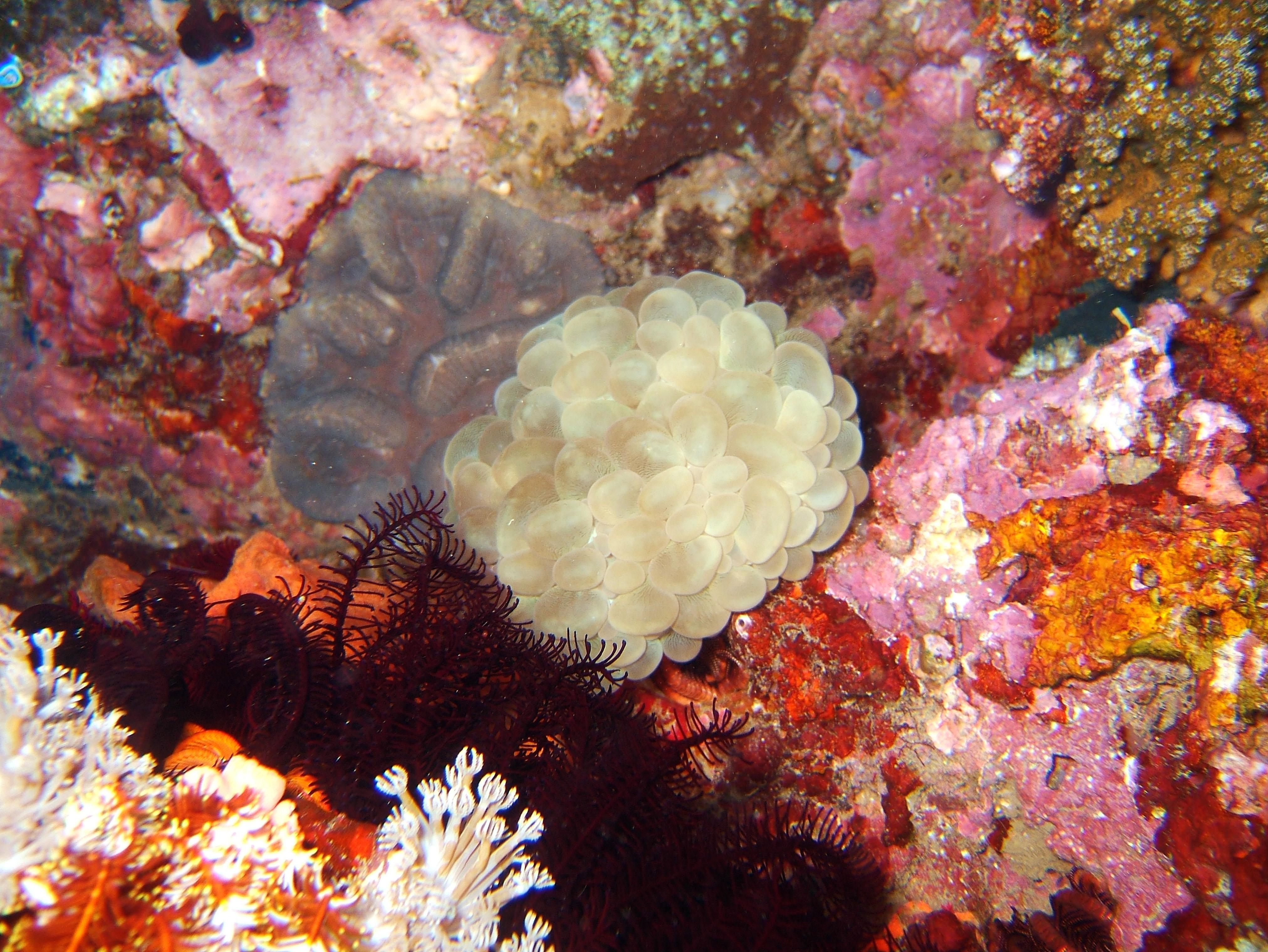 Dive 8 Philippines Mindoro Sabang Junk July 2005 58