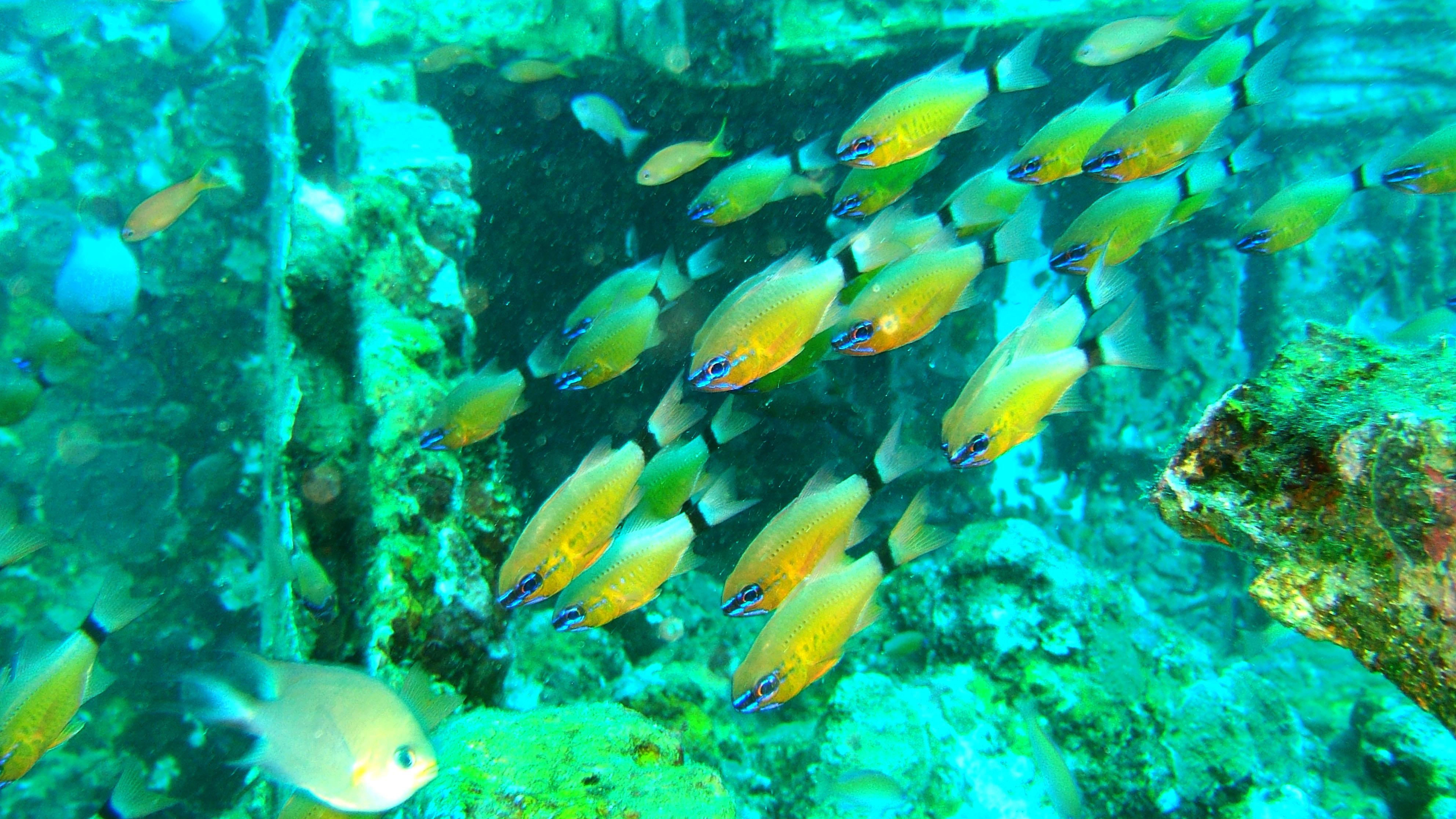 Dive 8 Philippines Mindoro Sabang Junk Nov 2005 04