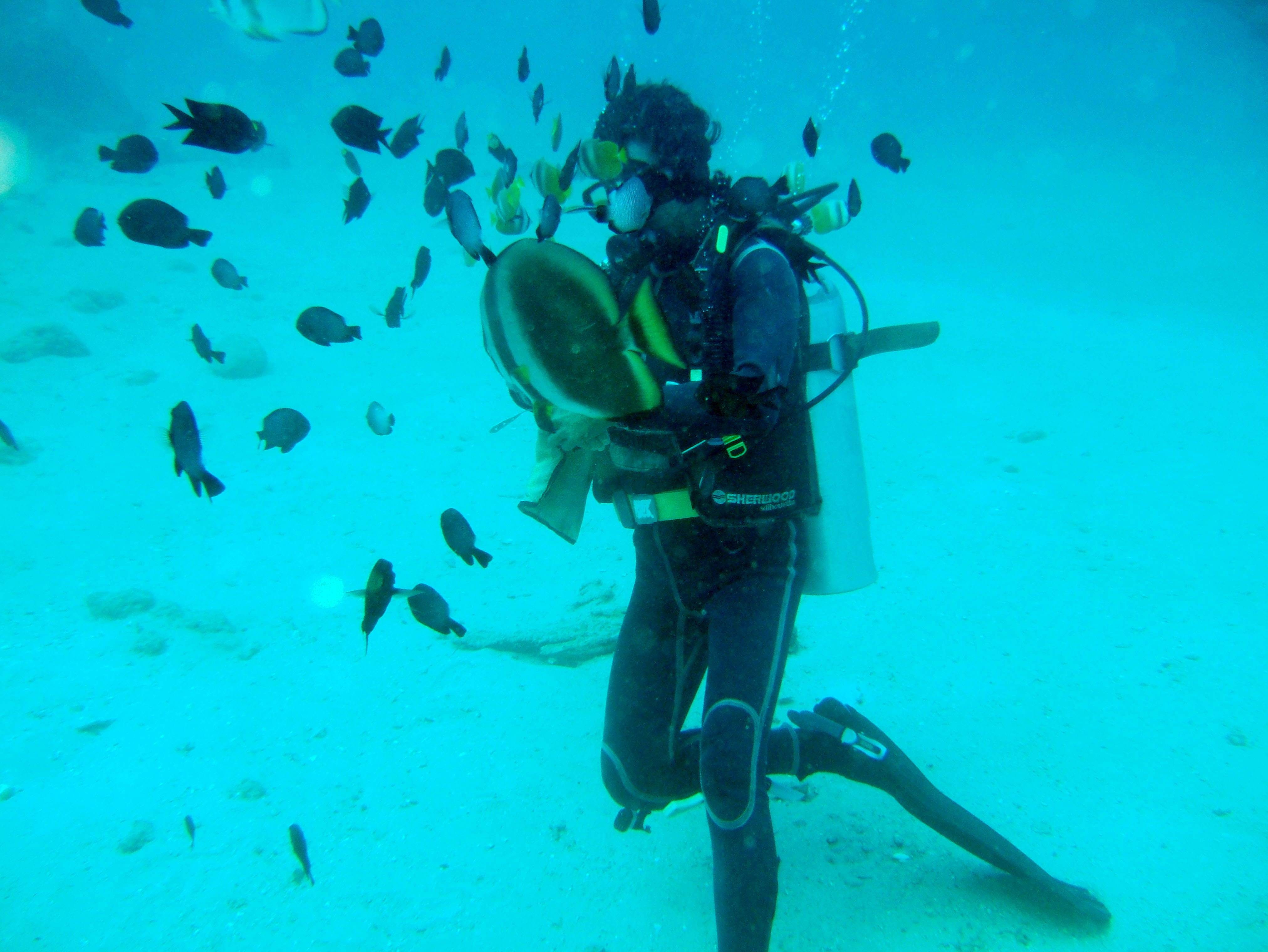 Dive 8 Philippines Mindoro Sabang Junk Nov 2005 07