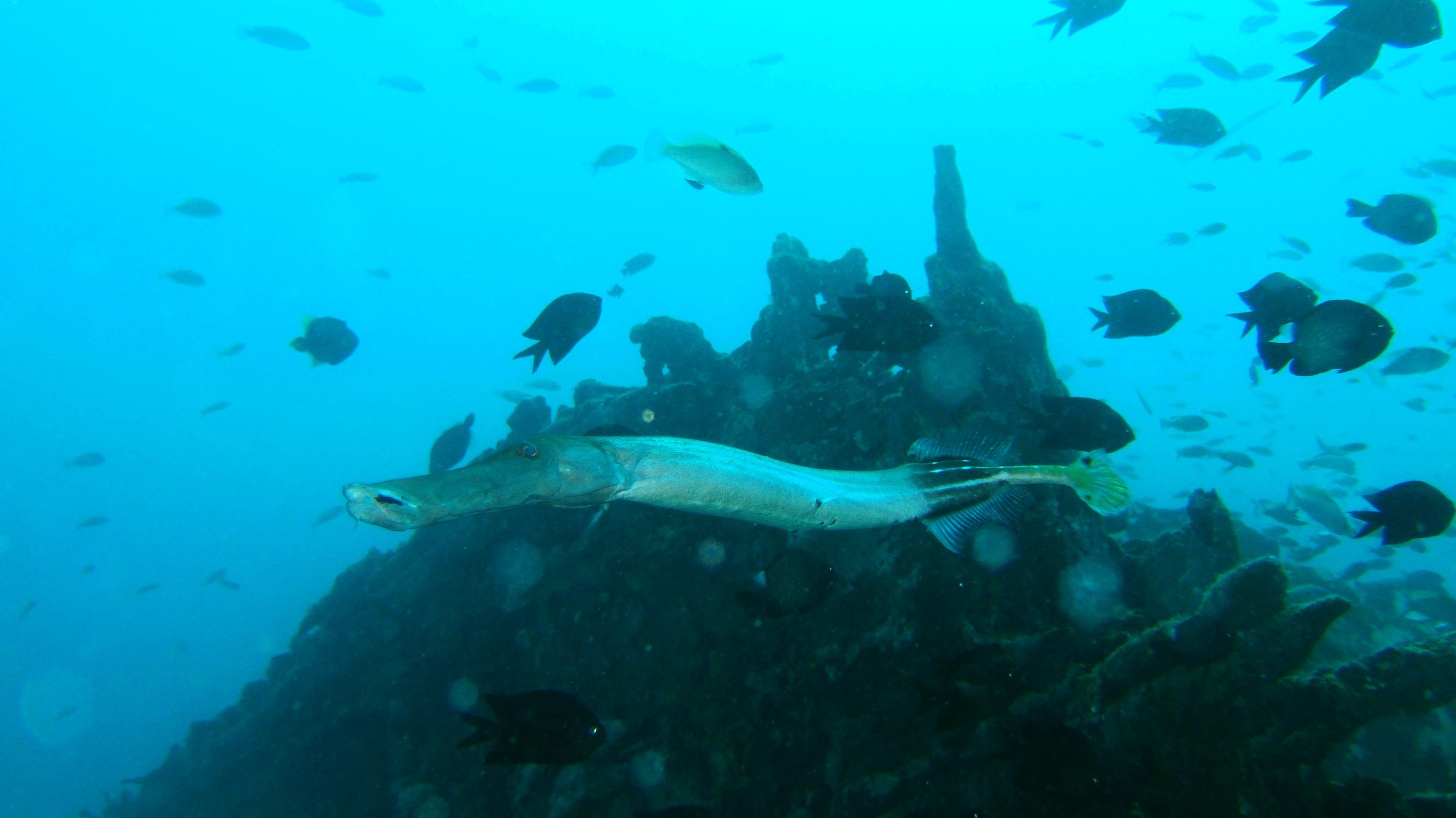 Dive 8 Philippines Mindoro Sabang Junk Nov 2005 10