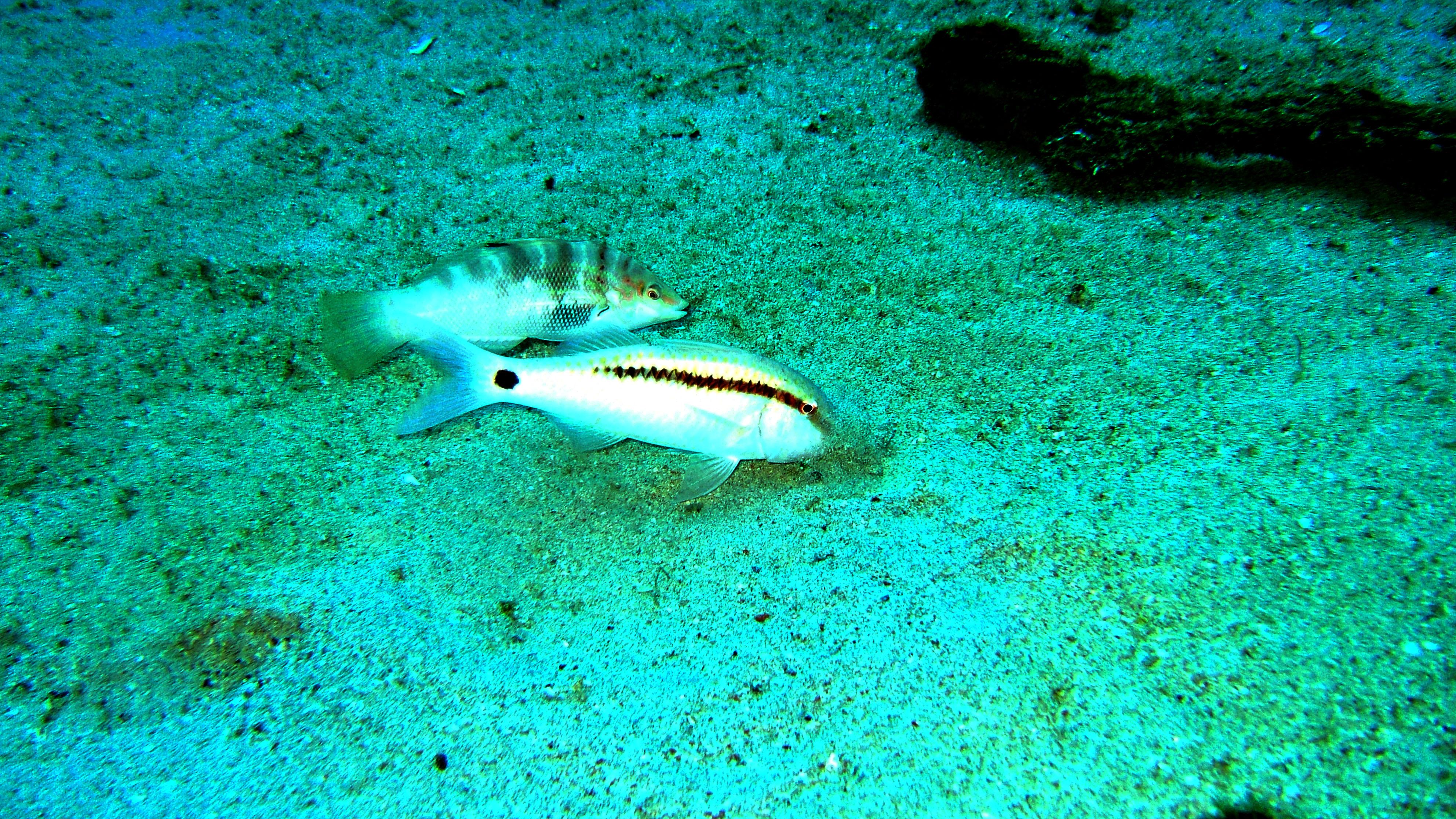 Dive 8 Philippines Mindoro Sabang Junk Nov 2005 12