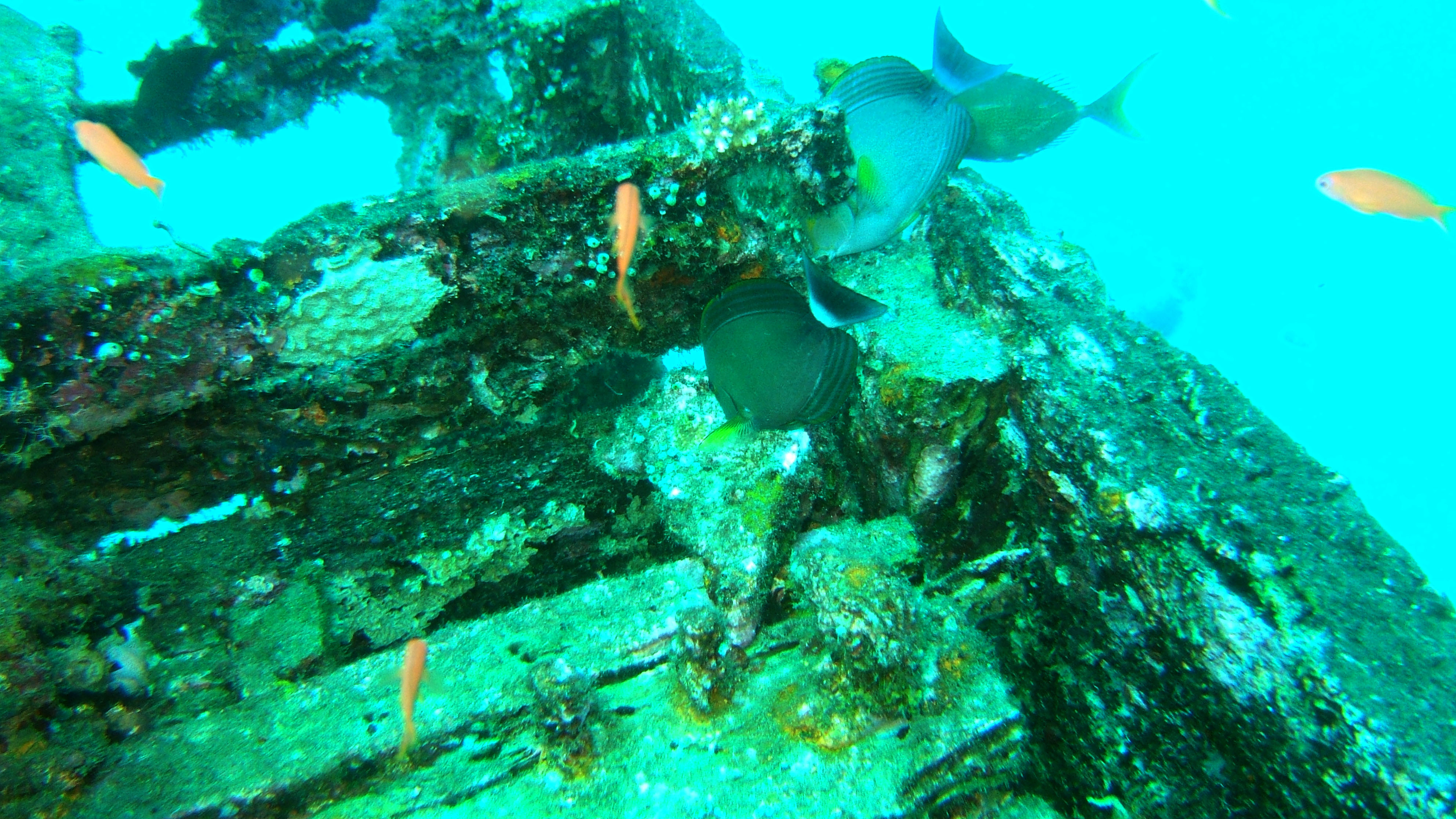 Dive 8 Philippines Mindoro Sabang Junk Nov 2005 13