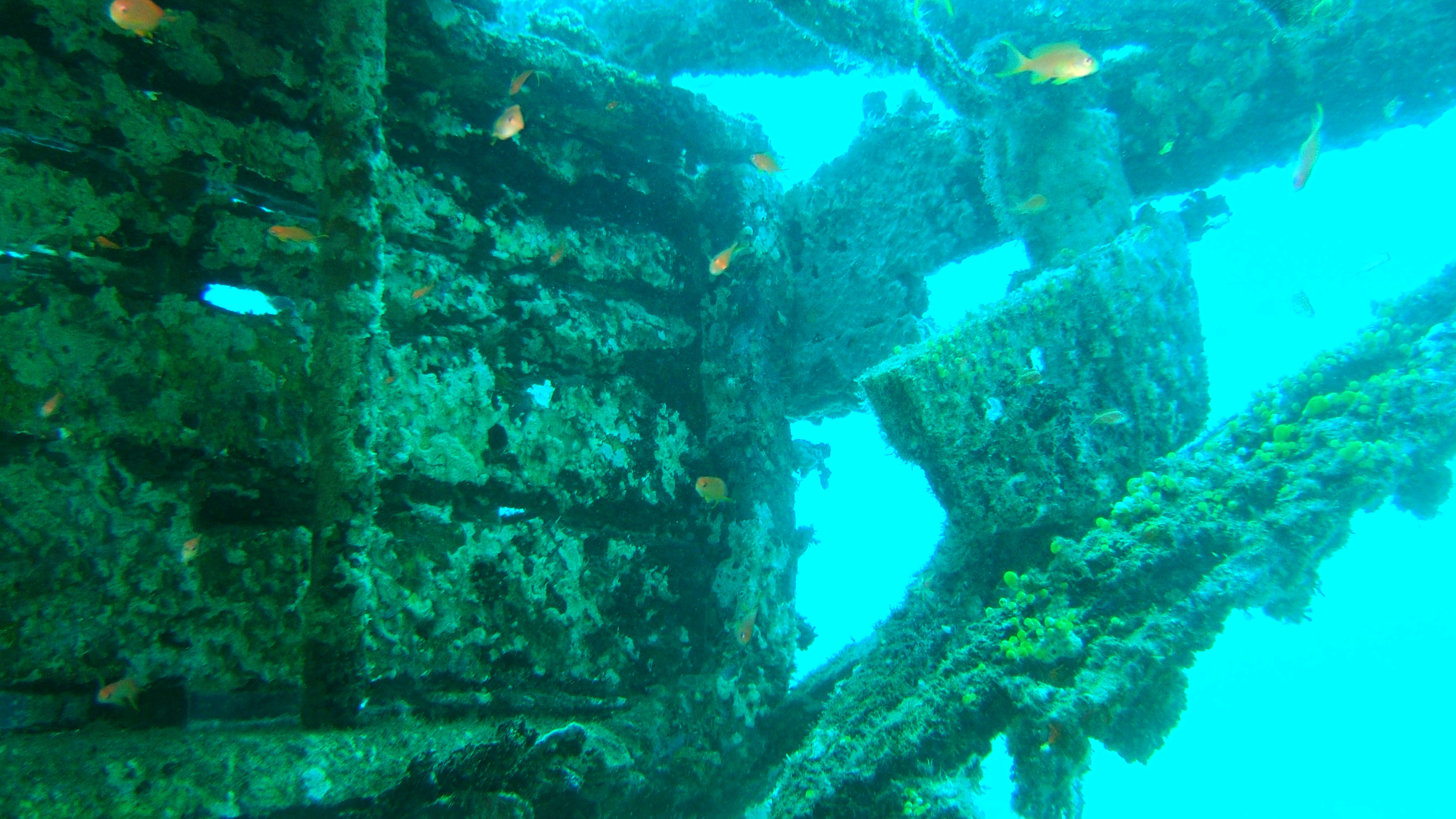 Dive 8 Philippines Mindoro Sabang Junk Nov 2005 17