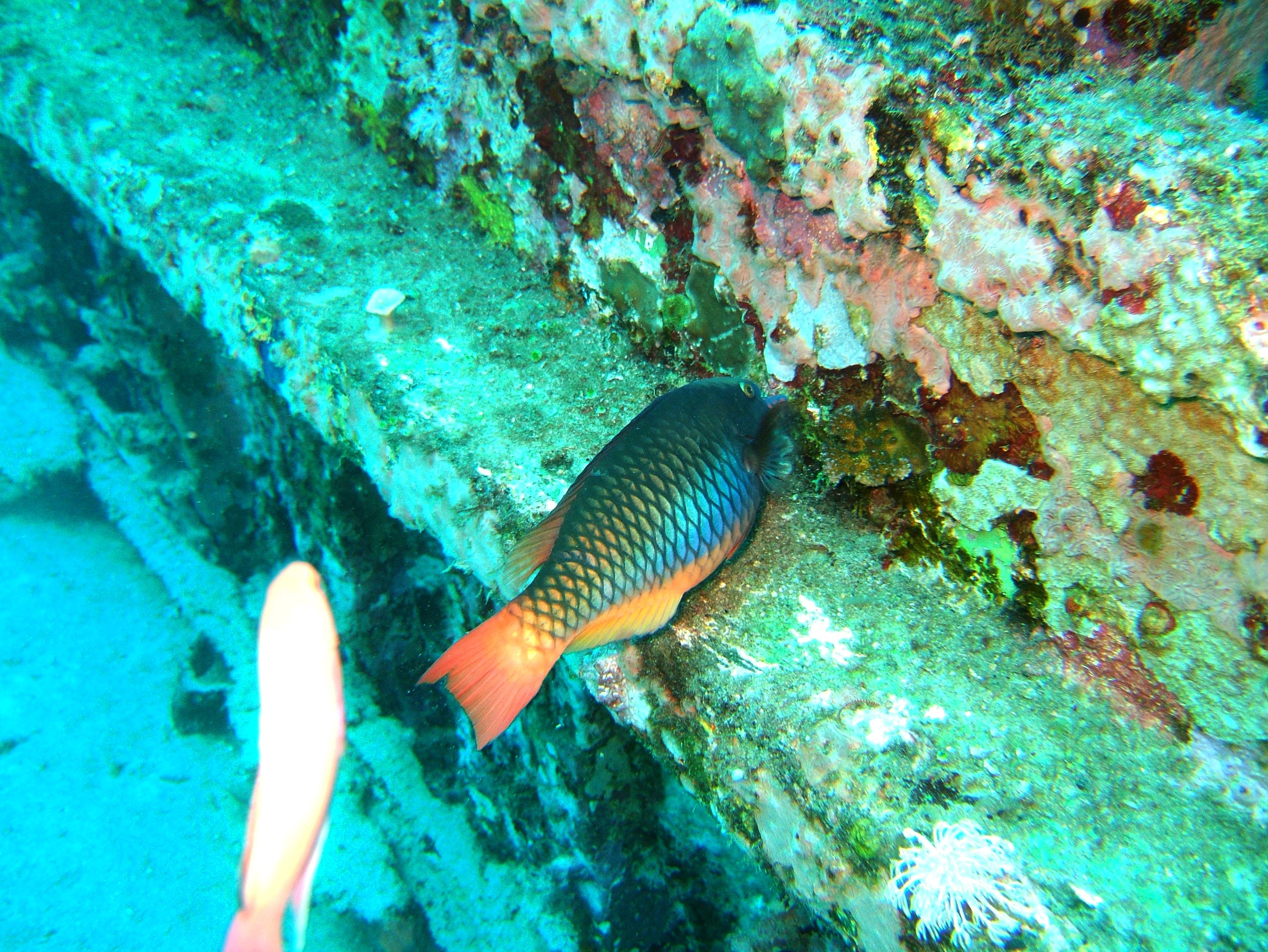 Dive 8 Philippines Mindoro Sabang Junk Nov 2005 24