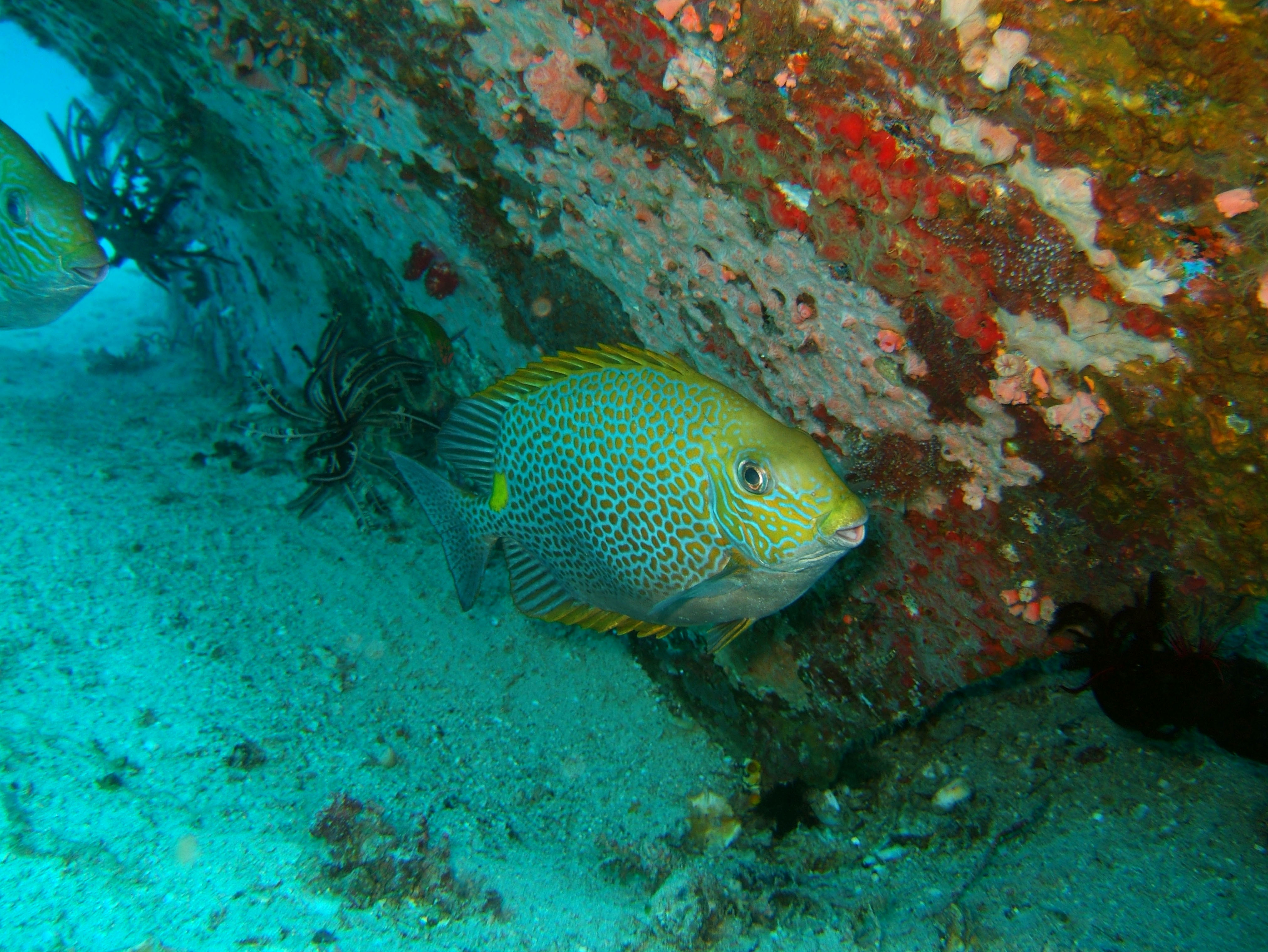 Dive 8 Philippines Mindoro Sabang Junk Nov 2005 31