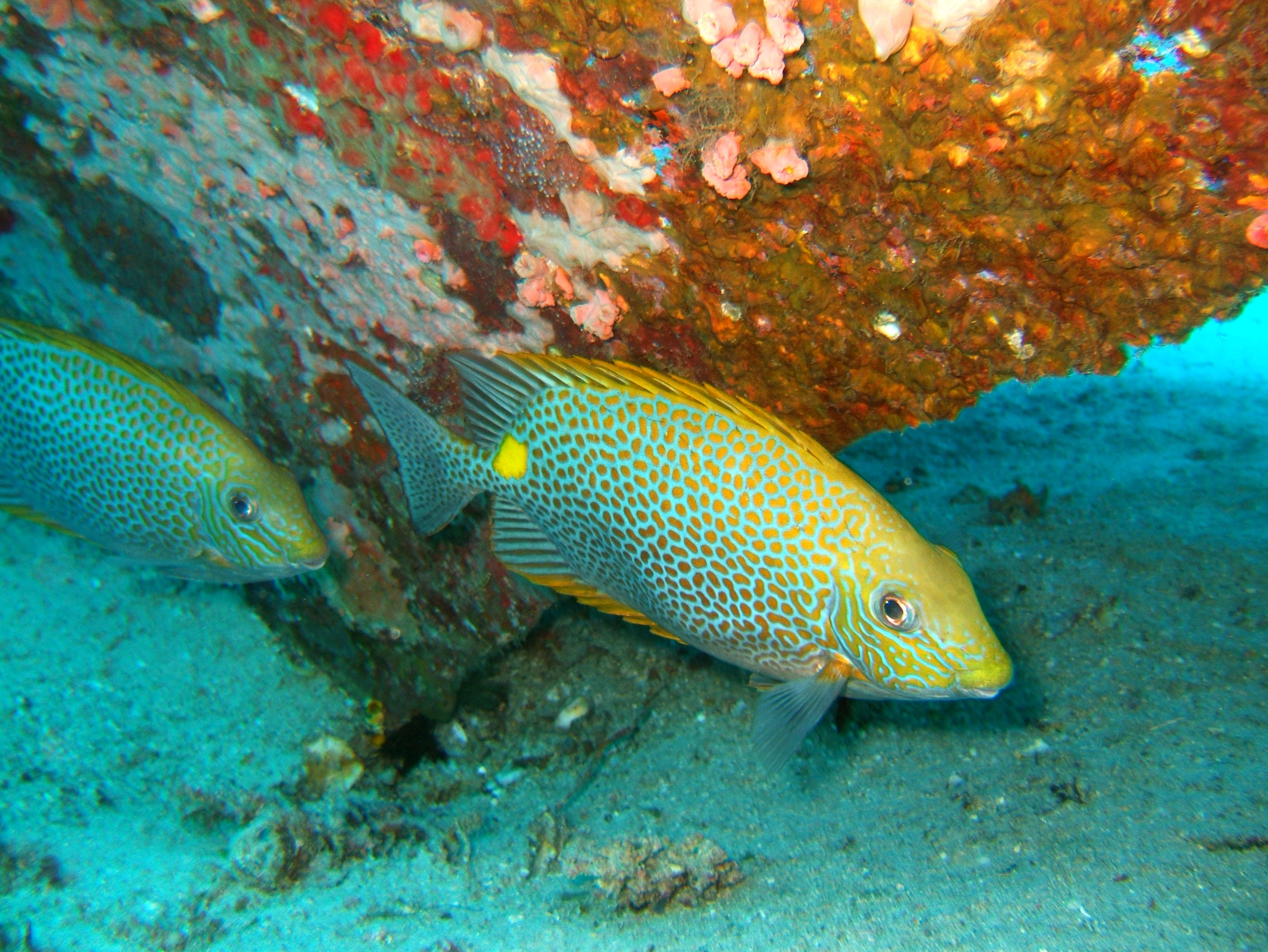 Dive 8 Philippines Mindoro Sabang Junk Nov 2005 32