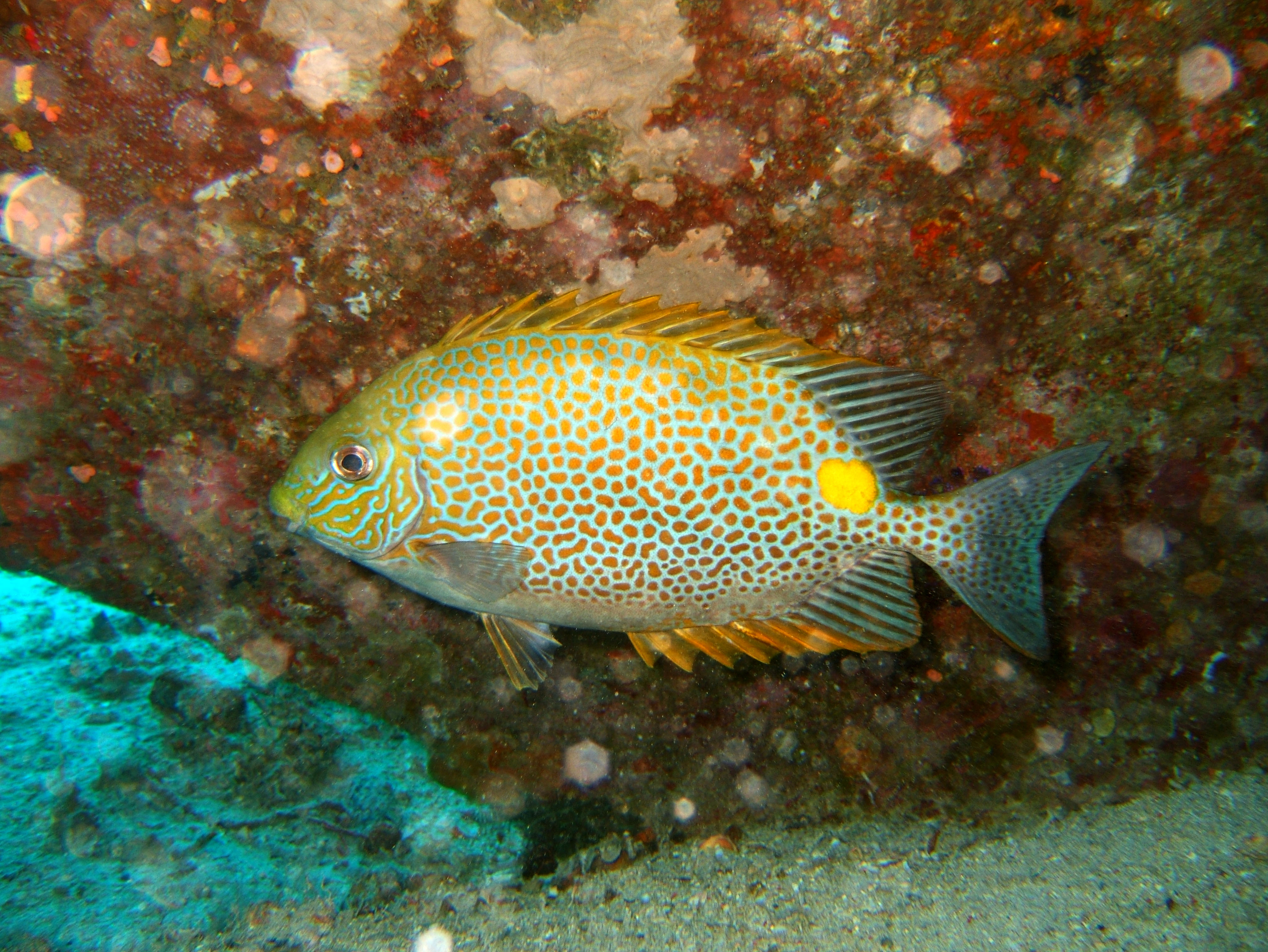 Dive 8 Philippines Mindoro Sabang Junk Nov 2005 37