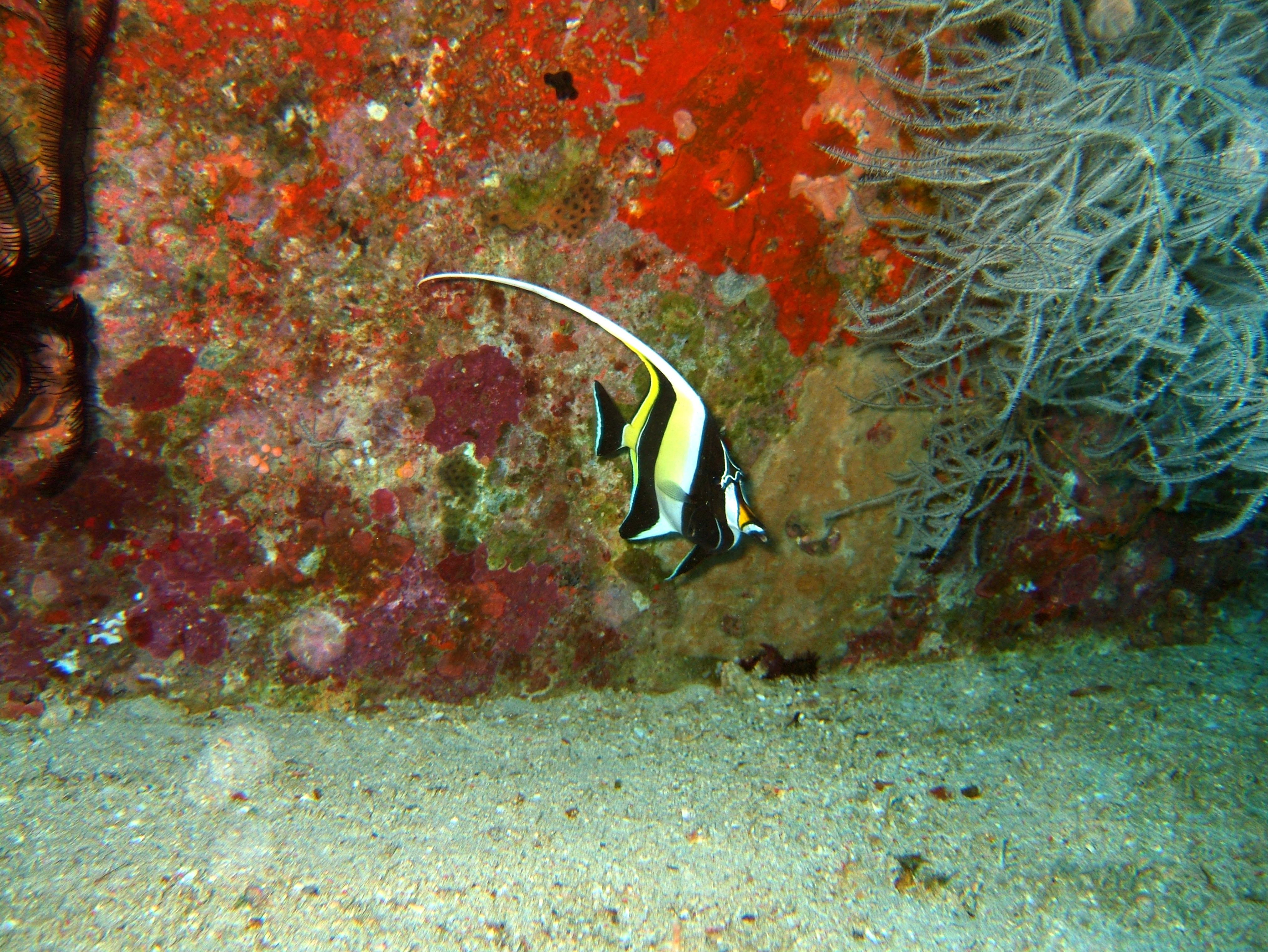Dive 8 Philippines Mindoro Sabang Junk Nov 2005 39