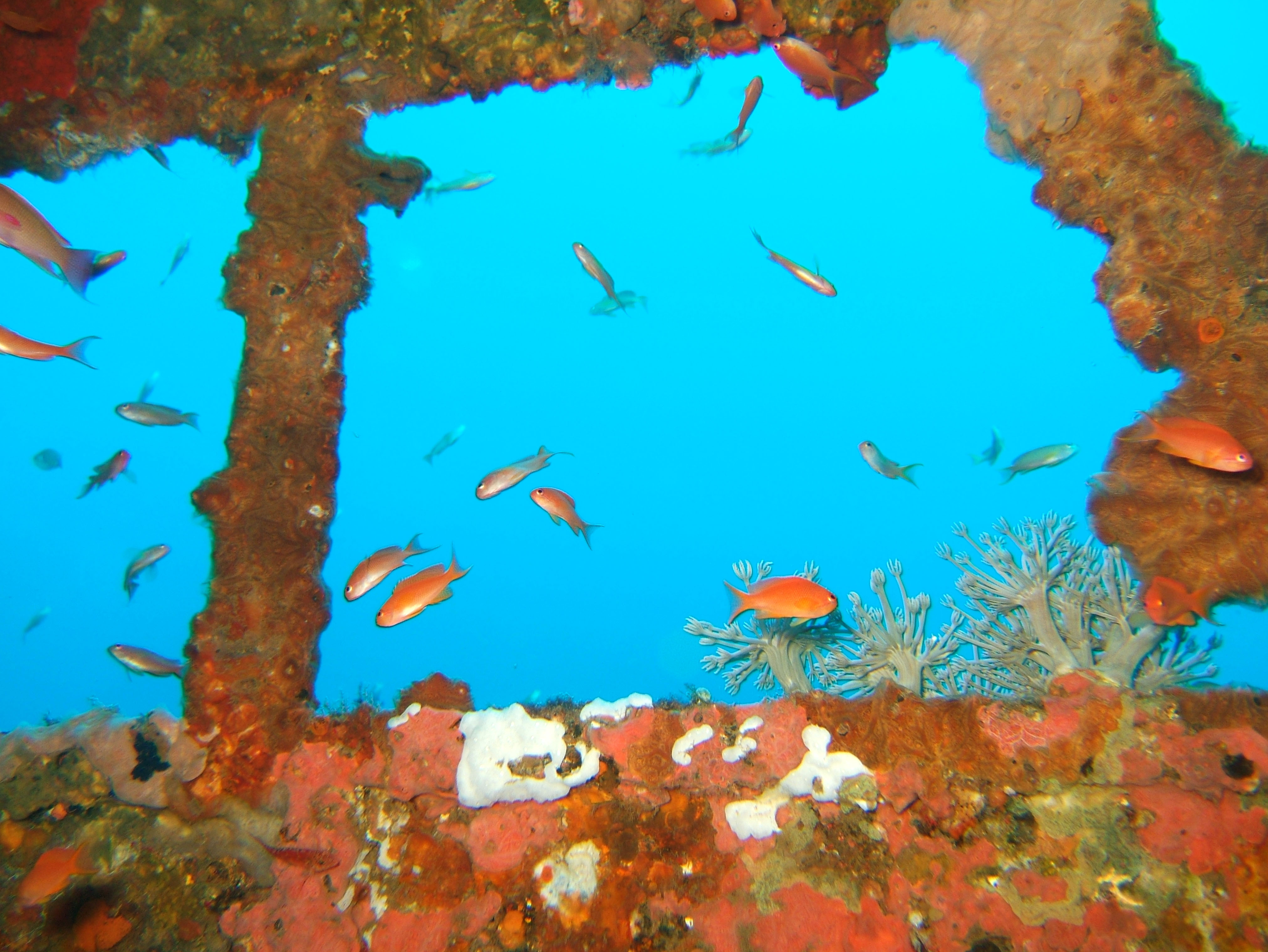 Dive 8 Philippines Mindoro Sabang Junk Nov 2005 53