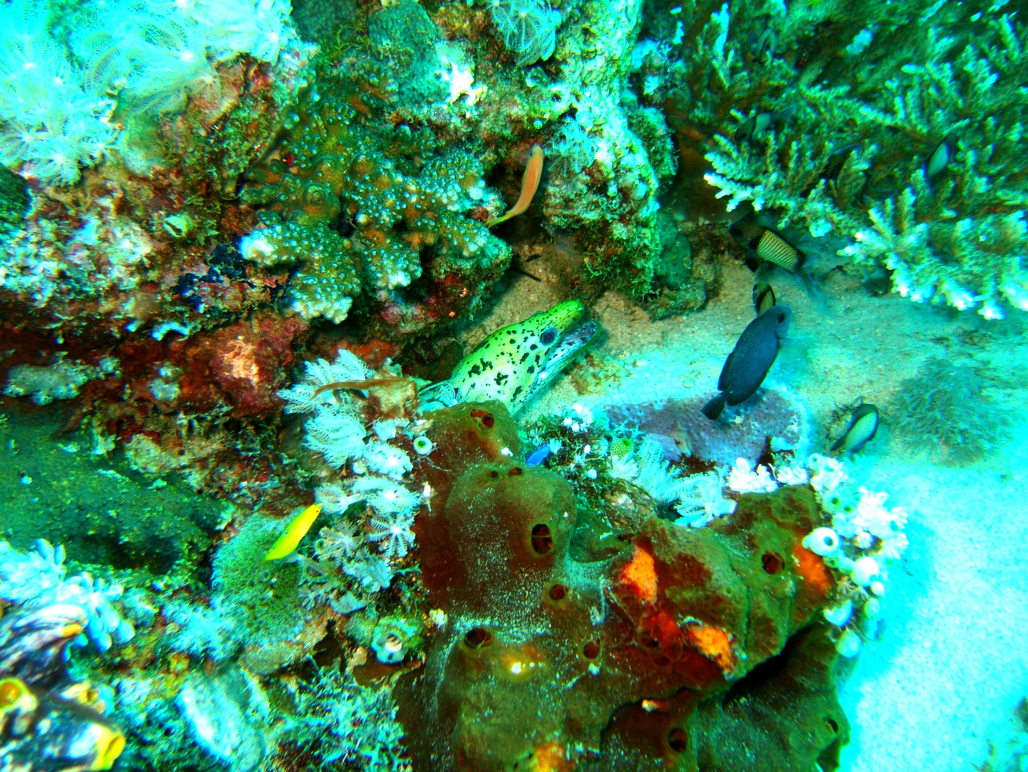 Dive 8 Philippines Mindoro Sabang Junk Nov 2005 59