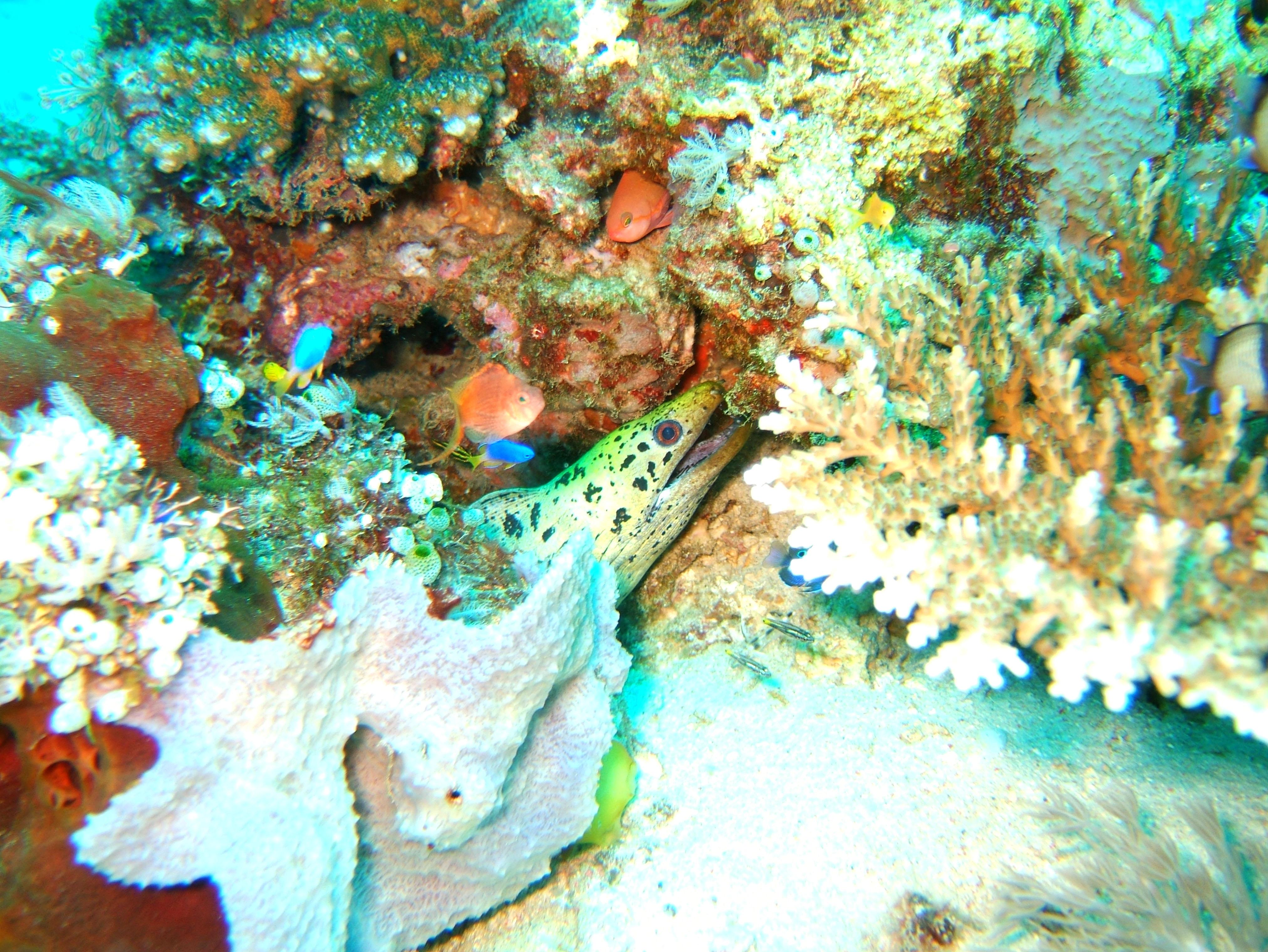 Dive 8 Philippines Mindoro Sabang Junk Nov 2005 62