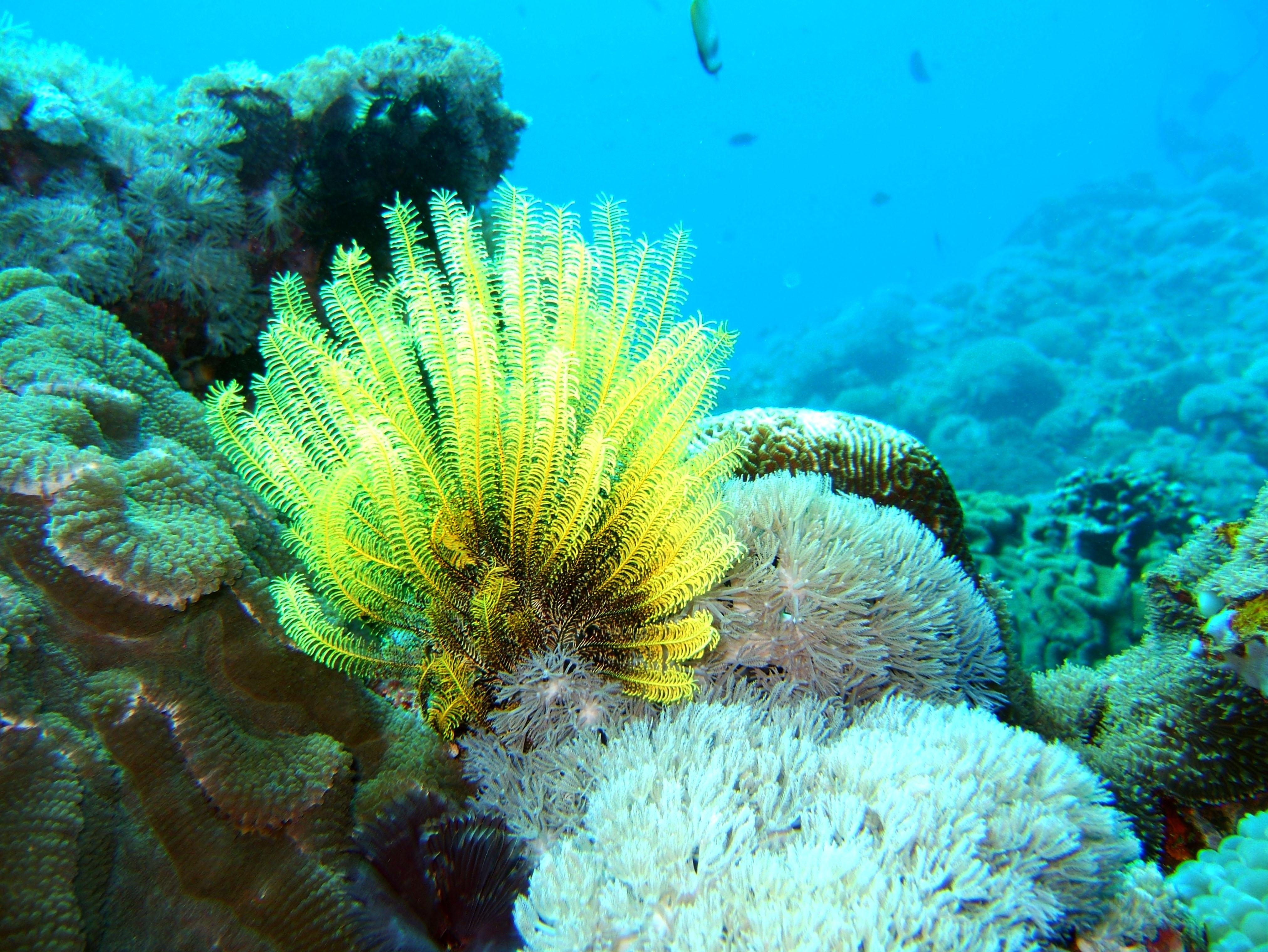 Dive 8 Philippines Mindoro Sabang Junk Nov 2005 69