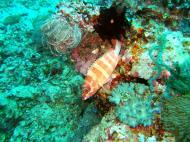 Asisbiz Dive 15 Philippines Mindoro Sabang West Escarceo Nov 2005 03