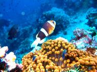 Asisbiz Dive 15 Philippines Mindoro Sabang West Escarceo Nov 2005 04