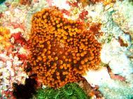 Asisbiz Dive 15 Philippines Mindoro Sabang West Escarceo Nov 2005 05