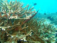 Asisbiz Dive 15 Philippines Mindoro Sabang West Escarceo Nov 2005 06