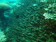 Asisbiz Dive 15 Philippines Mindoro Sabang West Escarceo Nov 2005 11