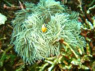 Asisbiz Dive 15 Philippines Mindoro Sabang West Escarceo Nov 2005 12