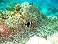 Asisbiz Dive 15 Philippines Mindoro Sabang West Escarceo Nov 2005 18