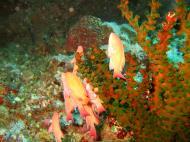 Asisbiz Dive 15 Philippines Mindoro Sabang West Escarceo Nov 2005 21