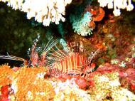Asisbiz Dive 15 Philippines Mindoro Sabang West Escarceo Nov 2005 22