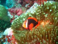Asisbiz Dive 15 Philippines Mindoro Sabang West Escarceo Nov 2005 27