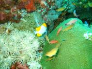 Asisbiz Dive 15 Philippines Mindoro Sabang West Escarceo Nov 2005 29