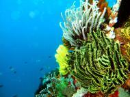 Asisbiz Dive 15 Philippines Mindoro Sabang West Escarceo Nov 2005 30