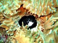 Asisbiz Dive 15 Philippines Mindoro Sabang West Escarceo Nov 2005 32