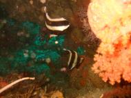 Asisbiz Dive 16 Philippines Mindoro Sabang hole in the wall Mar 2006 04