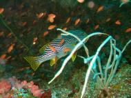 Asisbiz Dive 16 Philippines Mindoro Sabang hole in the wall Mar 2006 08