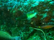 Asisbiz Dive 16 Philippines Mindoro Sabang hole in the wall Mar 2006 11