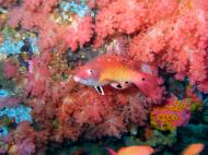 Asisbiz Dive 16 Philippines Mindoro Sabang hole in the wall Mar 2006 14