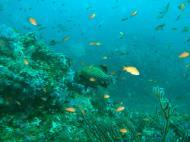 Asisbiz Dive 16 Philippines Mindoro Sabang hole in the wall Mar 2006 15
