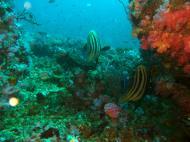 Asisbiz Dive 16 Philippines Mindoro Sabang hole in the wall Mar 2006 17