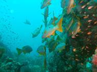 Asisbiz Dive 16 Philippines Mindoro Sabang hole in the wall Mar 2006 24