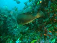 Asisbiz Dive 16 Philippines Mindoro Sabang hole in the wall Mar 2006 25