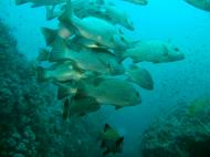 Asisbiz Dive 16 Philippines Mindoro Sabang hole in the wall Mar 2006 28